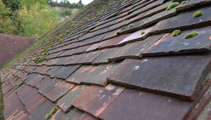 Roof Replacement Article Image